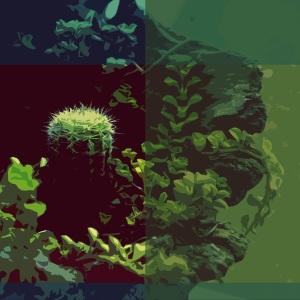 random cactus_edited-2
